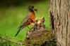 Birds - Parenting